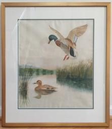Martha's prize-winning ducks